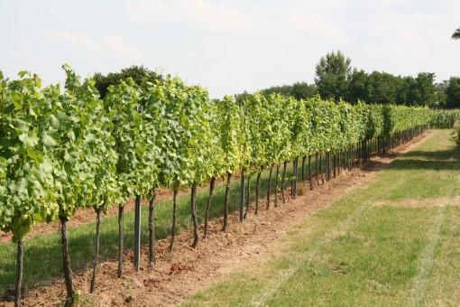 Vlaams-Hongaars Wijnproject